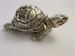 Medium Turtle